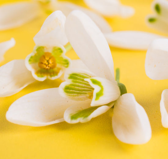 High angle view of white flowers in plate
