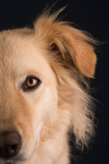 Close-up of dog looking away