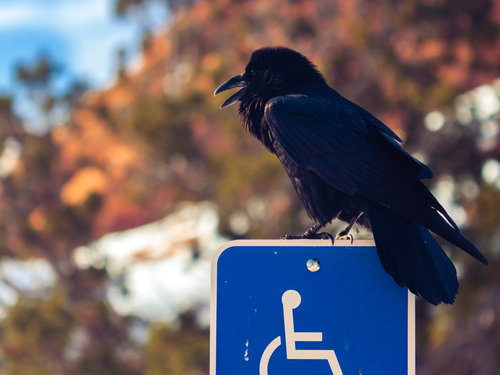 Close-up of bird perching on disabled sig