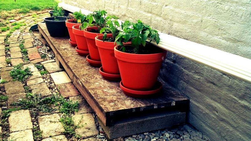 Garden Green Plants