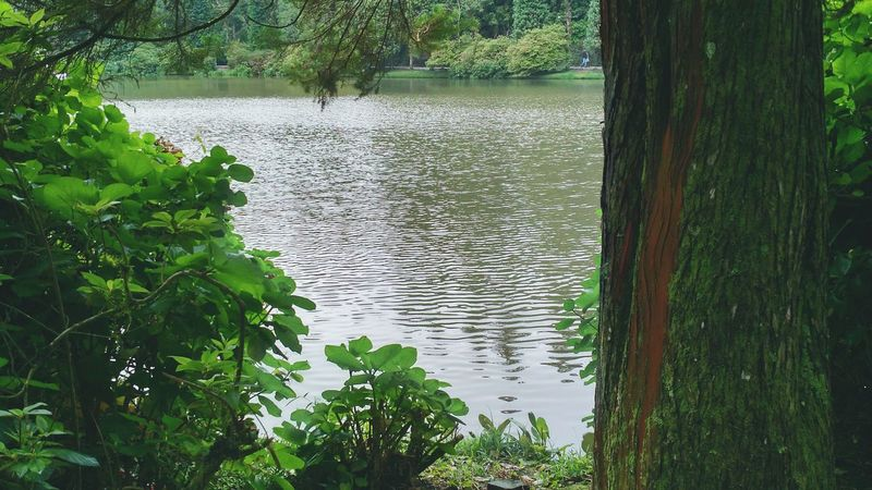 Lake Tree Bush Cold Days Cold Morning Traveling Enjoying Life Taking Photos Diferent Brazil Gramado Beutiful