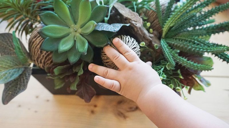 kid hand touches green plant in pot on wooden table Learning Things Environment Nature Touching Kid Hand  Human Hand Hand One Person Human Body Part Leaf Real People Plant Part Plant Lifestyles Holding Green Color Nature High Angle View Personal Perspective Close-up Growth Day Body Part Finger
