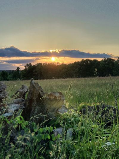 Sunset in the Countryside Plant Sky Field Land Beauty In Nature Landscape Tranquility Tranquil Scene Scenics - Nature Environment Nature Sunset Growth Tree No People Agriculture Rural Scene Green Color Grass Non-urban Scene