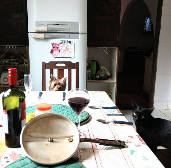 cool meal Animal Meal Pet Portraits PetFood Cão E Gato Cats And Dogs Eyeem Market Lunch Time This Is Family Table Wine Cask Prepared Food Served Alcoholic Drink Wine Bottle Wine Rack