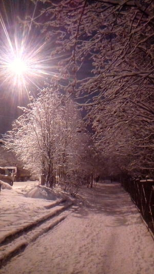 Night Winter Cold Temperature Snow No People Tree Outdoors Day Nature Sky Illuminated Cityscape Beauty In Nature Landscape Shades Of Winter