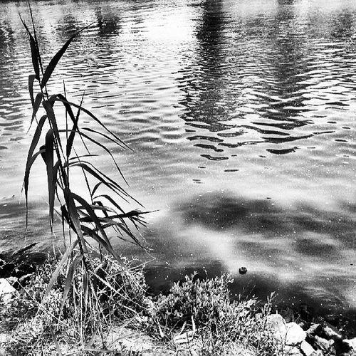 Pond Picoftheday Israel_hdr Insta_global israelinstagram hayarkon