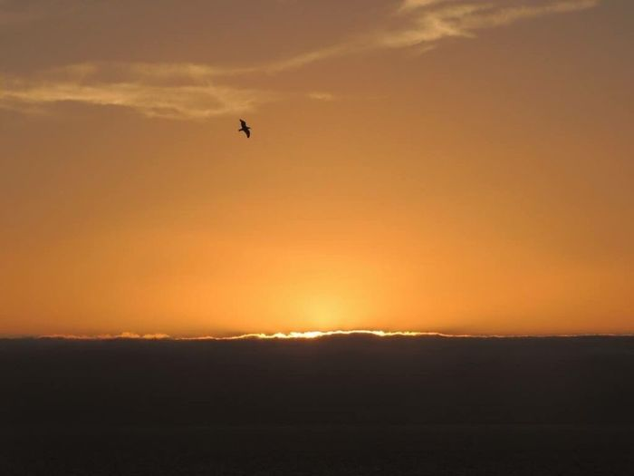 Sunset Sunset_collection Sunset Silhouettes Bird Flying At Sunset Sunset And Sea Orange Sky Horizon Over Sea Beautiful Sunset In Front Of Me Enjoying The Sunset The Purist (no Edit, No Filter) Reñaca Beach , Chile