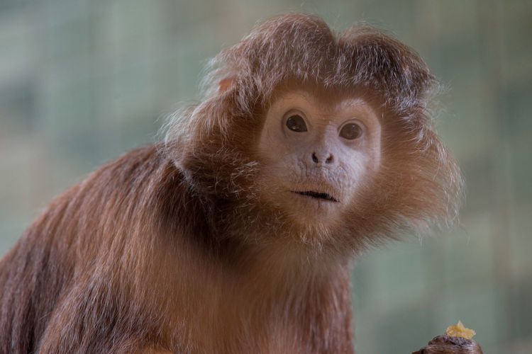 Portrait of alert monkey