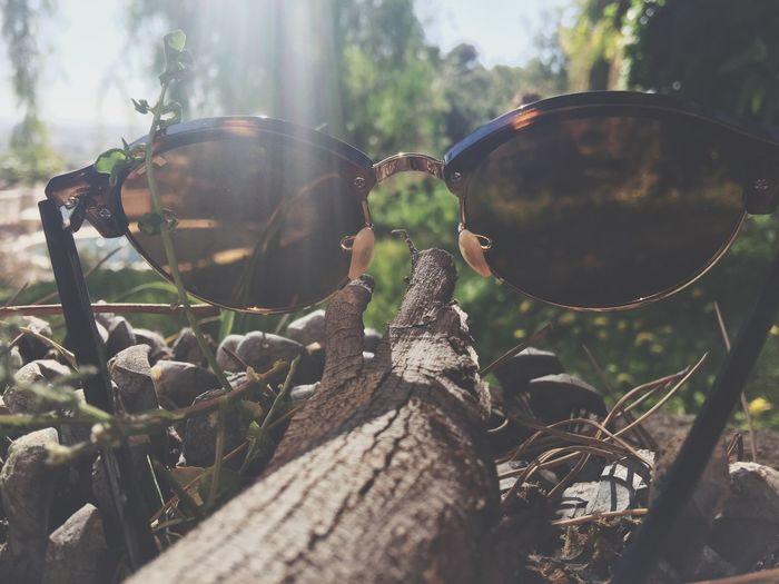 Close-up of sunglasses on plant