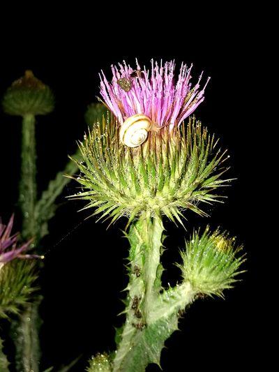 Snail Nature Photography Naturelovers