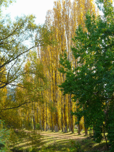 Bright, Vic, Australia Australia Australian Landscape Beauty In Nature Bright, Victori Colours Of Autumn Coloursplash Day Nature No People Outdoors Poplar Riverside Riverside Photography Serenity Tranquil Scene Tranquility Tree Victoria, Australia Water