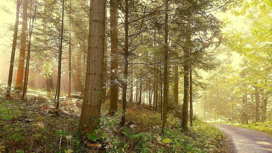 We enjoy the beautiful magic of the forest 😍🌲🌳🍃🍁🍂 Tree Forest WoodLand Nature Woods Outdoors Switzerland Idyllic Beauty In Nature Lovethenature Adventure Power In Nature Loveworld Foggy Weather Sunnydays Autmncolors Autmn Trees Autmn☺