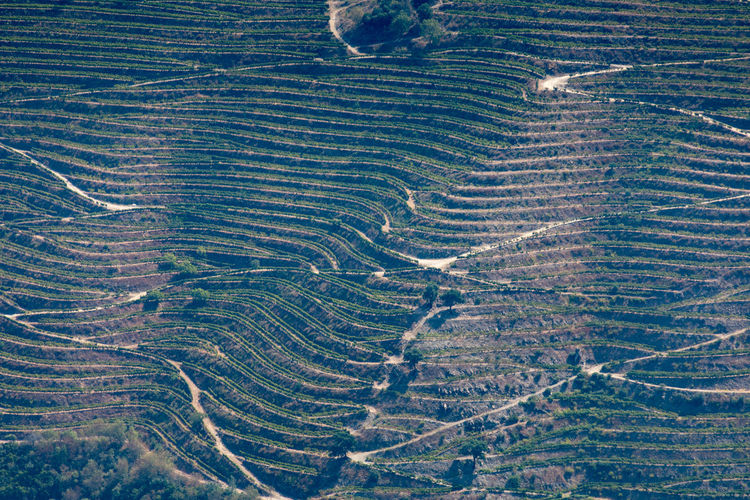 Douro valley vineyard pattern, Portugal Douro  Pattern, Texture, Shape And Form Portugal Aerial View Agriculture Arid Climate Backgrounds Beauty In Nature Day Environment Field Full Frame High Angle View Land Landscape Natural Pattern Nature No People Outdoors Pattern Purity Rural Scene Scenics - Nature Tranquil Scene Tranquility
