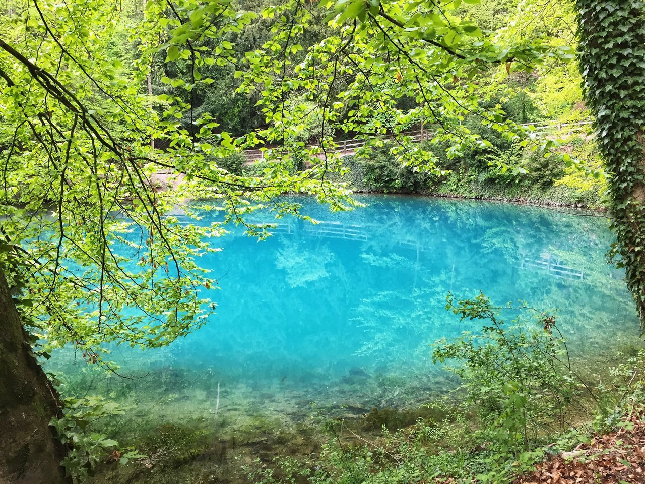 plant, tree, water, beauty in nature, tranquility, nature, day, growth, tranquil scene, scenics - nature, forest, no people, green color, land, lake, outdoors, idyllic, non-urban scene, branch, turquoise colored, rainforest