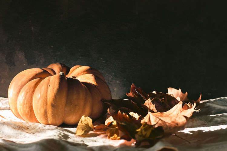 Pumpkin and maple leaves illuminated by the morning sun. thanksgiving and halloween postcard.