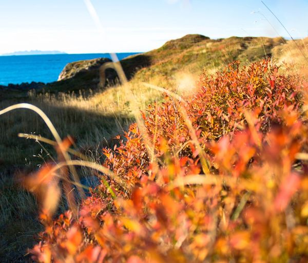 Plants growing on land by sea against sky