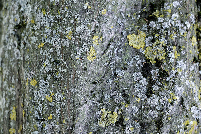 Arbre Background Background Texture Backgrounds Beauty In Nature Close-up Day Fragility Freshness Full Frame Growth Jardin Floral De Paris Lichen Moth4fok Nature No People Outdoors Paris Plant Rough Texture Textured  Tree Tree Trunk Live For The Story The Great Outdoors - 2017 EyeEm Awards The Photojournalist - 2017 EyeEm Awards EyeEmNewHere Place Of Heart EyeEm Selects