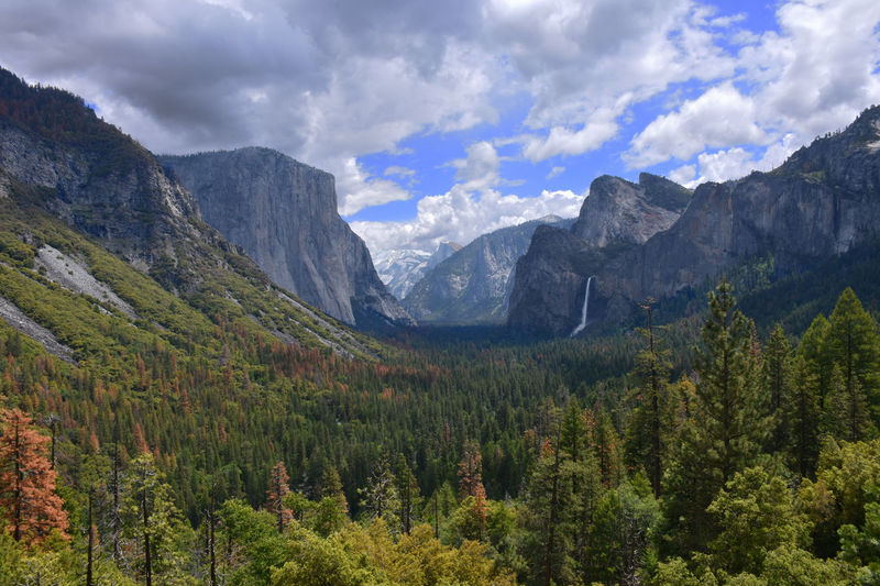 Trees Growing By Mountains Against Cloudy Sky At Yosemite Valley
