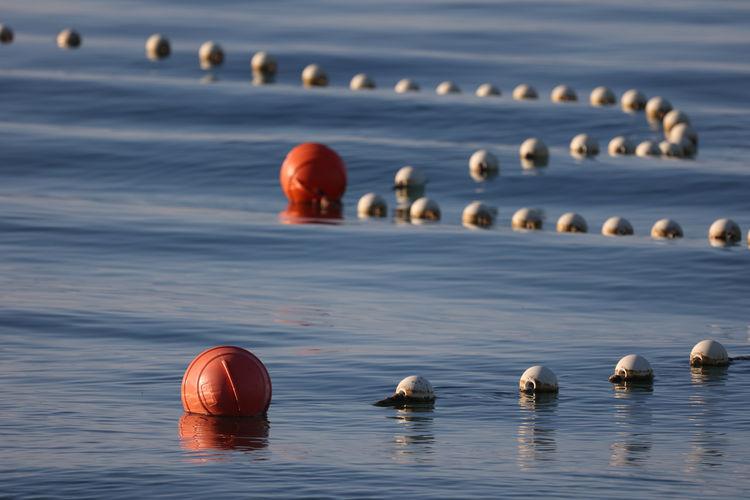 Ducks floating on water