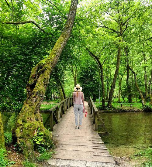 Rear view of people on footbridge in forest