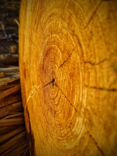 Close Up Of A Log Wood - Material Close-up Nature Backgrounds Textured  Day Tree Ring Outdoors Tree Stump No People Tree Brown Wood Beauty In Nature Sunlight Tree Nature