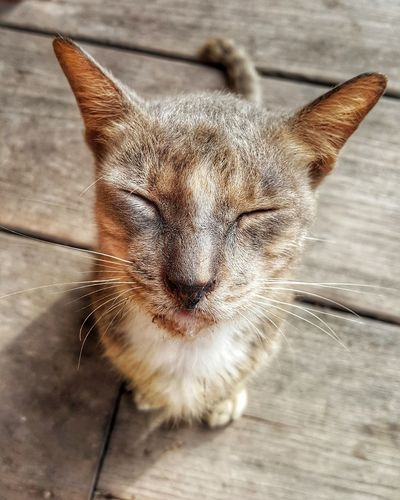 I dream of food... Foam Eyes Free Roaming Begging Feline Sitting Kind Resort Pets Domestic Cat Feline Whisker Close-up Cat Floorboard Mammal Boardwalk Stray Animal Home