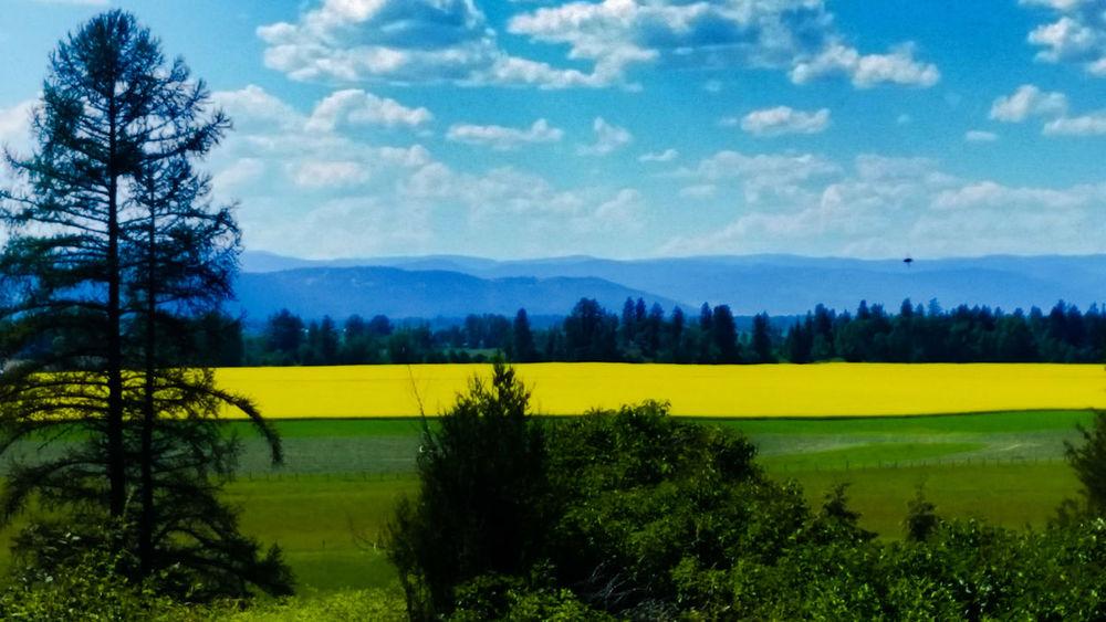 Taking Photos Flowers Photography Nature Big Sky Country Trees Kalispell Montana Rocky Mountains Montana
