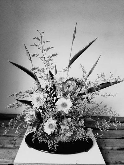 生け花 Flower