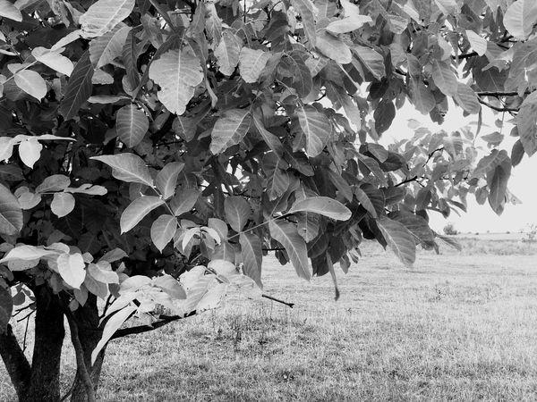 The tree Tree Trees Trees Leaves Autumn Autumn Colors Autumn Leaves