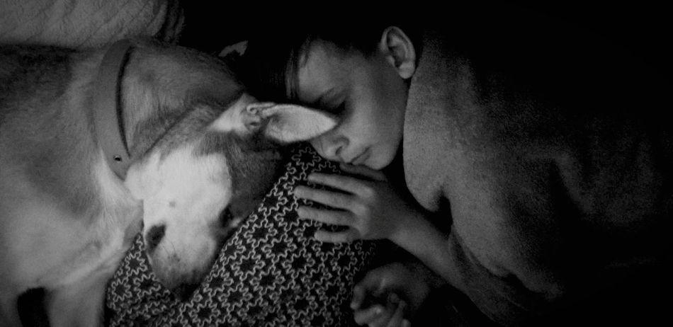 Napping Dogs Sleeping Sleeping Dog Blackandwhite Photography Sleeping Together DogAndChild Human Hand Human Face Portrait Close-up