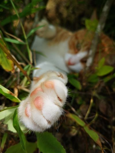 Mi gato😍 Cat Lovers Parts Of The Body Cathands Loveanimals❤️ Cute Pets Beautiful Animals