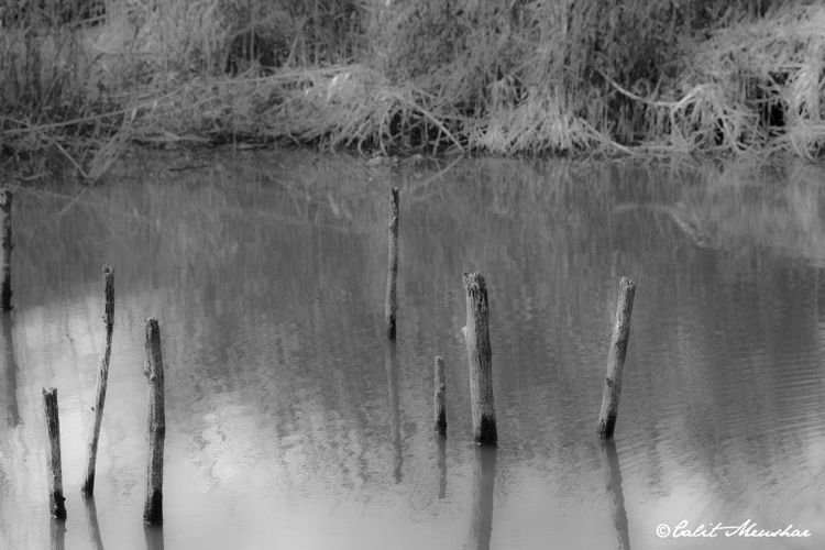 Black & White Nature Nature Photography Trees B&w B&w Nature B&w Photo B&w Photography Beauty In Nature Beauty In Nature Black And White Black And White Photography Blackandwhite Blackandwhite Photography Blackandwhitephotography Lake Nature Nice Place Outdoors Trees In The Lake Trunk In The Water Trunk Tree Trunks Water Waterfront