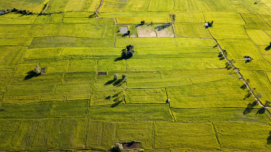 Agriculture Landscape Field Plant Green Color Animal Rural Scene Animal Themes Environment Aerial View Mammal No People Nature High Angle View Land Day Farm Livestock Domestic Animals Group Of Animals Outdoors