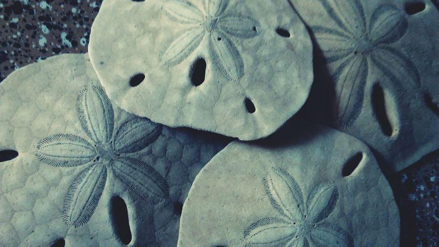 beach money Sandollar EyeEm Selects Close-up Textured  Full Frame Backgrounds Detail