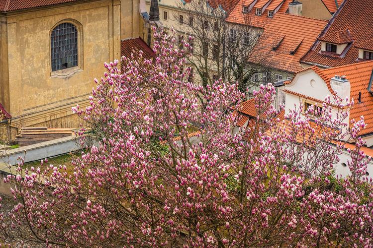 Pink flowering plant against building