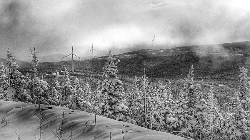Winter Nature Outdoors EyeEm Best Shots Most Stunning Shot A Bird's Eye View Canada Coast To Coast Quebec Gaspesie Windtravellers Windtech