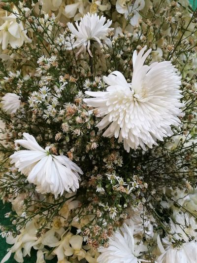 White Color Beauty In Nature Nature Flower Flower Head Growth Springtime Plant Freshness Close-up No People