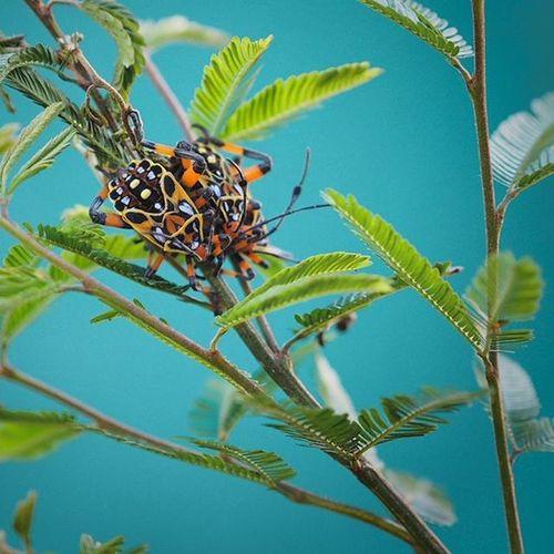 Bugslife Bugsareawesome Insectsofinstagram Insects_perfection Insectstagram Bestnatureshot Natureshots Naturelover Usa_naturehippys