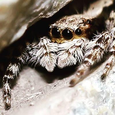 Hiding. Spider Spiderworld Ig_spider Ig_spiders spidergallery spiderontheworld labalaba hiding nice cute love greatshoot