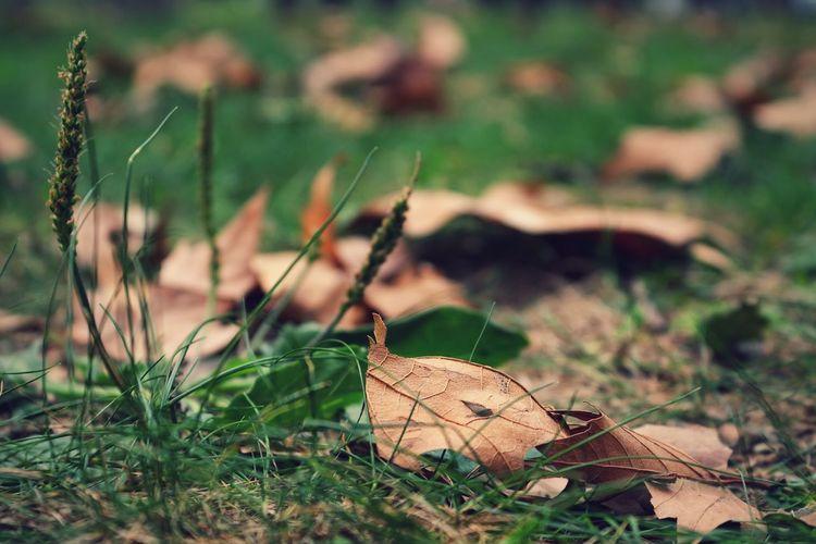 Nature EyeEm Nature Lover Taking Photos Relaxing
