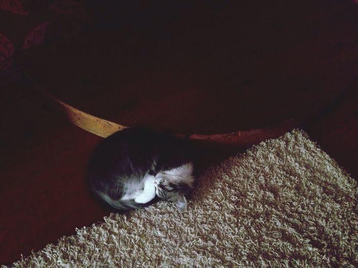 Sleepyhead Sleep Time Sleeping Cat Cat Lovers