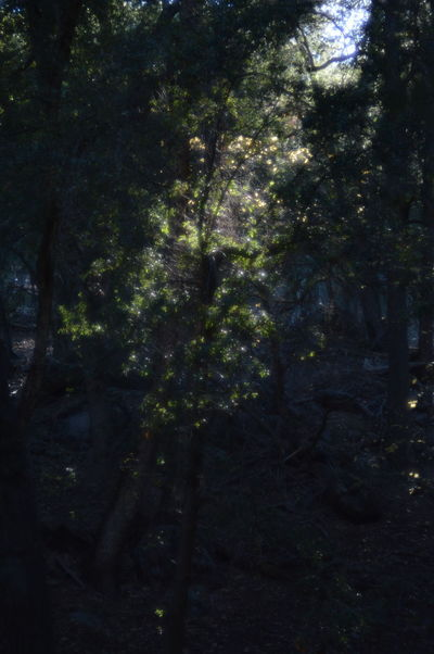 Afternoon light glowing betwixt the trees Palomar The Purist (no Edit, No Filter) Light And Shadow Forest Helios 44-2 The Purist ( No Edit, No Filter )