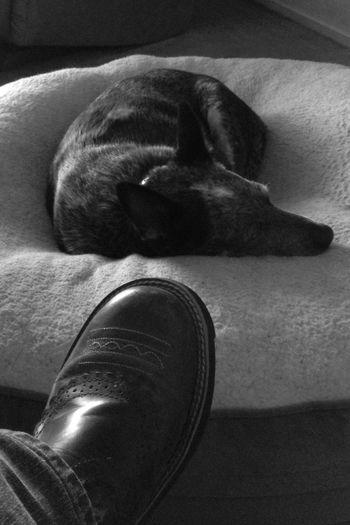 """Let sleeping dogs lie."" -Unknown Light And Shadow Blackandwhite Black & White Dog Sleeping EyeEm Best Shots - Black + White"