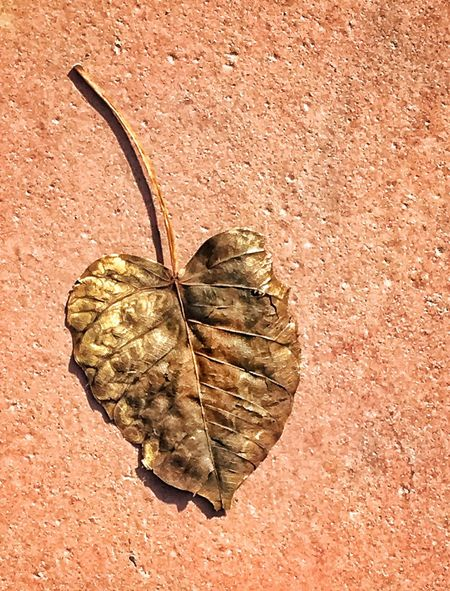 Last Leaf Dried Leaves Dry Minimalism Minimalobsession Brownish Dropped Alone Leaf Expired On The Floor Down On The Ground