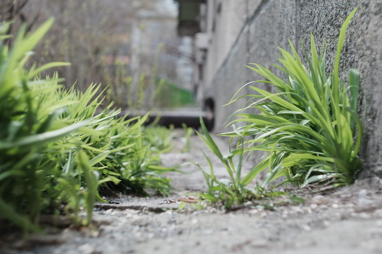 Close-up of plants growing in yard