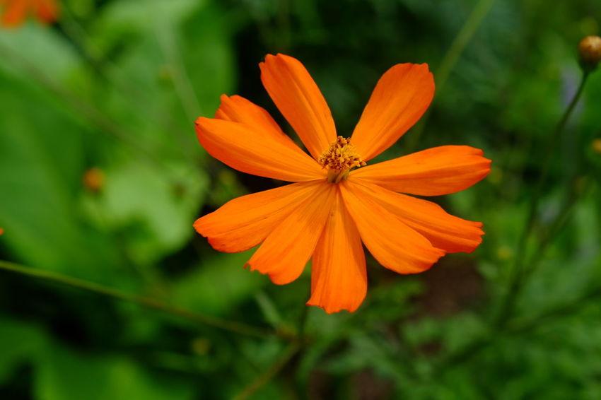 EyeEm Selects Flower Head Flower Beauty Petal Orange Color Close-up Plant