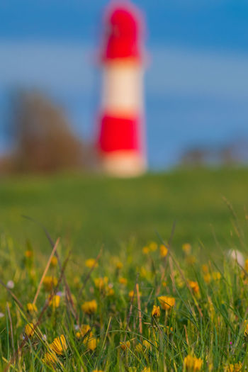 Flower Blossom Lighthouse Rapeseed Blossom RapeFlowers Rapeseed Field Cloud - Sky Spring Countryside Village Life Village Germany Selective Focus Grass Field Land Nature Guidance Tower Architecture Built Structure Close-up Direction Surface Level