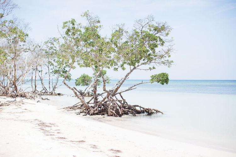 Beach Beauty In Nature Blue Cayo Jutías Clear Water Green Landscape Nature No People Sand Sea Sky Tree Water White Sand White Sand Beach