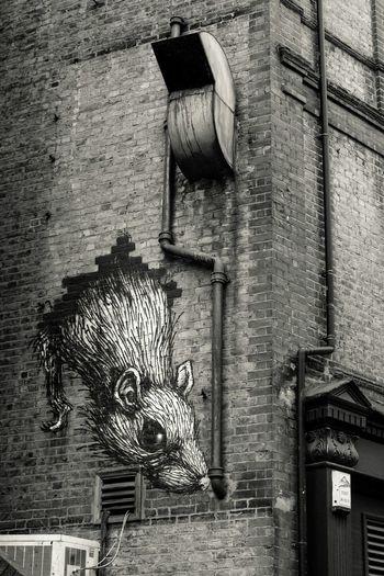 Rat by ROA, New Goulston Street, London Streetphotography Graffiti London Graffitiporn Wallart Wallpainting Graffiti Art Street Art UrbanART Black&white