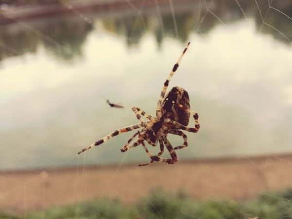 Nature Outdoors No People Animal Wildlife Spider One Animal Beauty In Nature Water Day Close-up Animals In The Wild Animal Themes